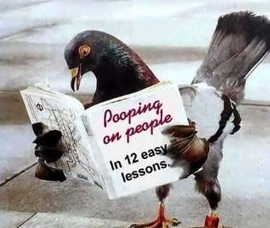 Bird_book_1