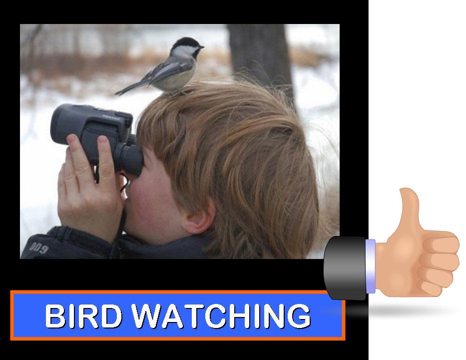 Birdwatching.jpg